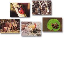 Tiere und Vögel Fotokarten