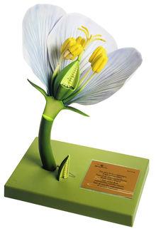 BoS 15/10 Typ einer freikronblättrigen Angiospermenblüte