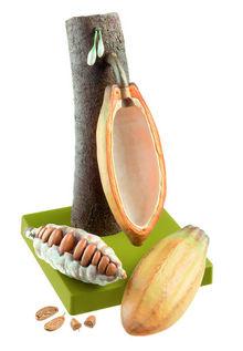 BoS 15/33 Frucht des Kakaobaums