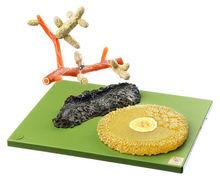 BoS 226/1 Mykorrhiza der Waldkiefer