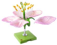 Botanische Modelle