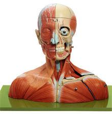 BS 3 Kopf und Hals