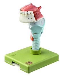 GS 4 Kehlkopf mit Zunge
