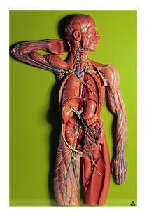 HS 19/1 Lymphgefässsystem