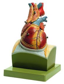 HS 22 Herz auf Zwerchfellsockel