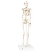 Mini Skelett Shorty, Sockel