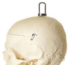 QS 10/11 Künstliches Homo-Skelett