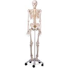 Skelett Luxus-Fred, Rollenstativ