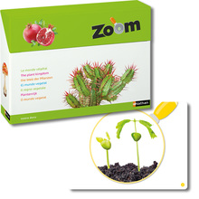 Zoom – die Welt der Pflanzen