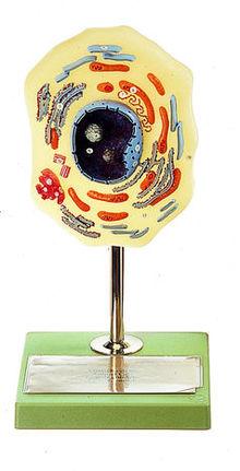 ZoS 110/1 Tierische Zelle