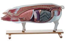ZoS 18/1 Modell eines Zuchtschweines (Muttertier)