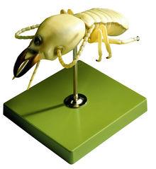 ZoS 49/14 Termite