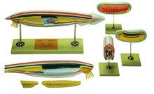 ZoS 60 Komplette Kollektion Lanzettfischchen