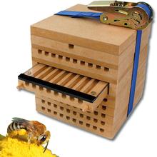 Zuchtset Wildbienen